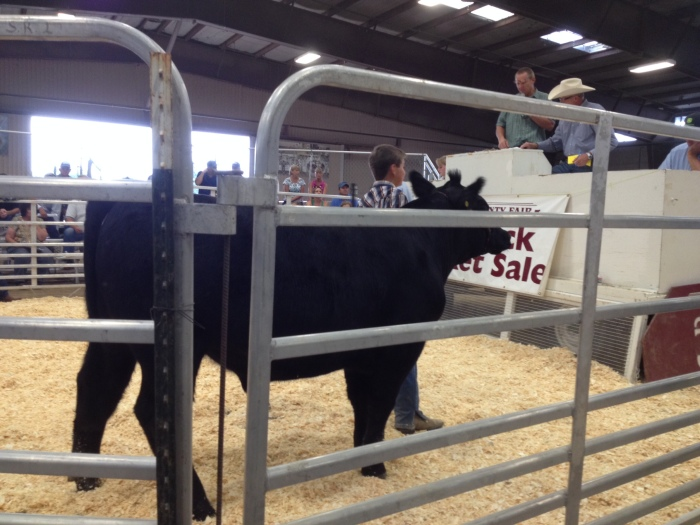 Mark proudly shows his steer to the audience